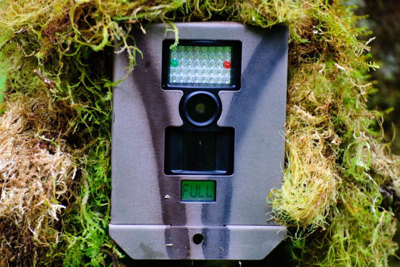 How do i conceal my trail camera